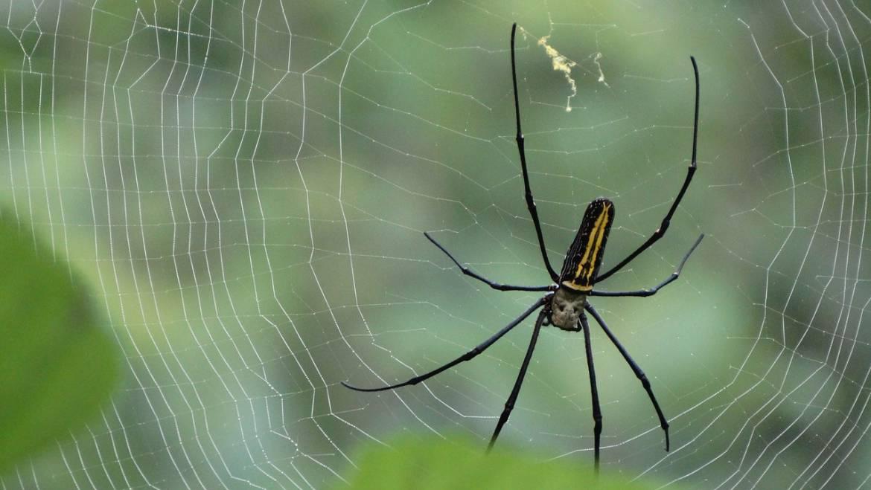 Spiders Extermination
