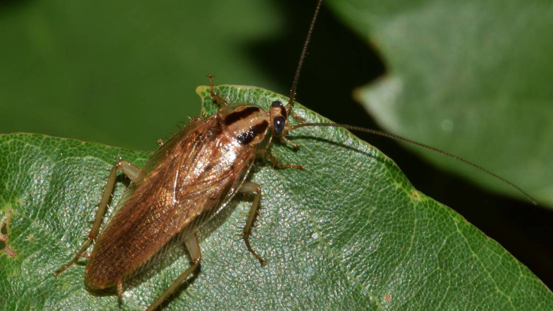 Roach Extermination