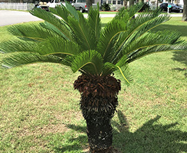 Shrub and Palm