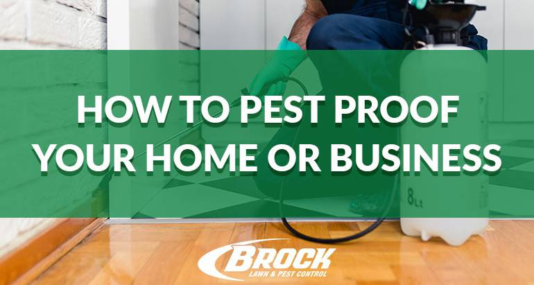 How to Pest-Proof Your Home or Business