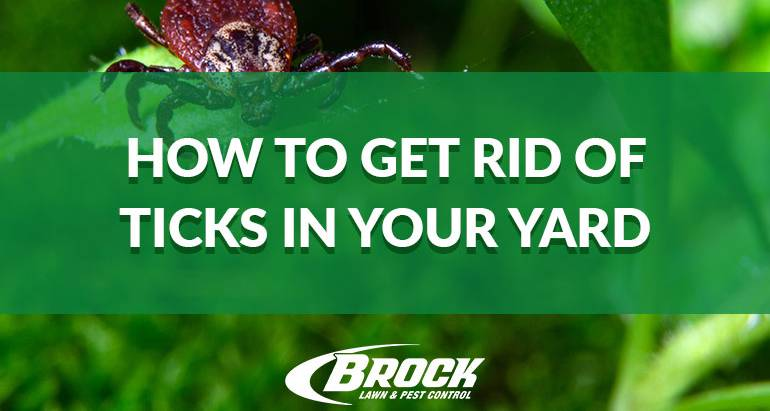 Tips to Get Rid of Ticks In Your Yard