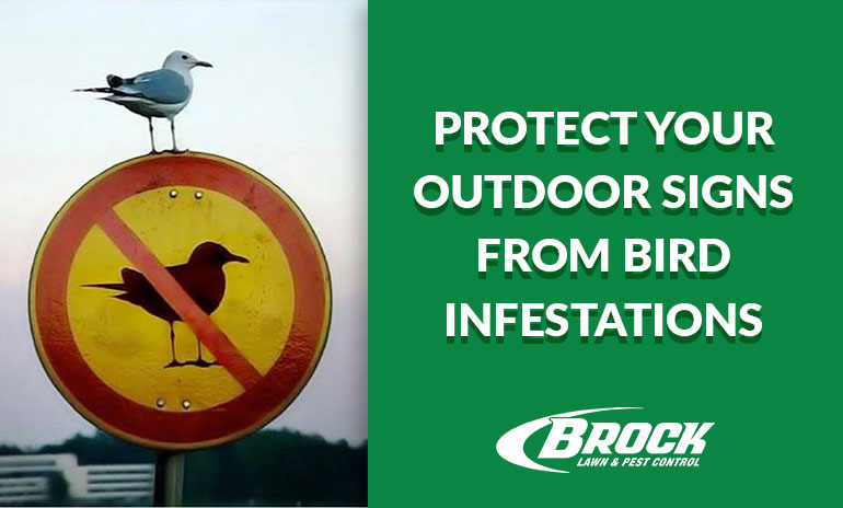 Protect Your Outdoor Signs from Bird Infestations